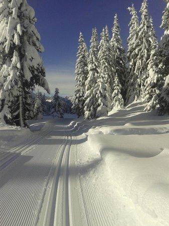 Centro sci di fondo Passo San Pellegrino - Alochet: Epifania, pista incantevole...