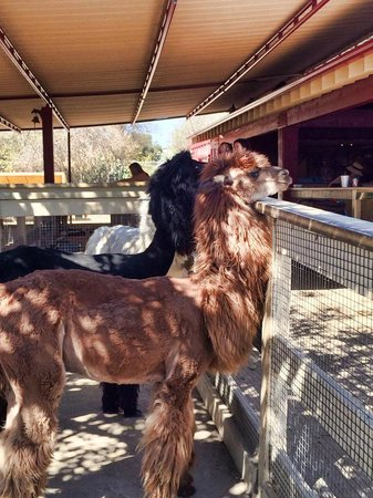 Petting Zoo Picture Of Ramos House Cafe San Juan Capistrano