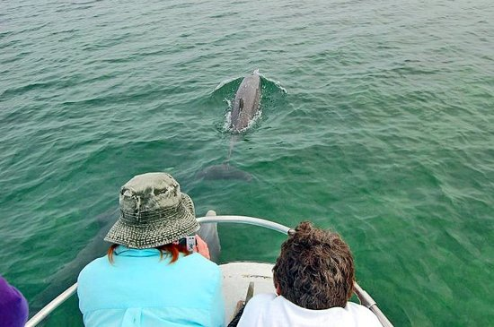 Oceanic Society Field Station: Join our researchers to observe wild dolphins, many which we know by name.