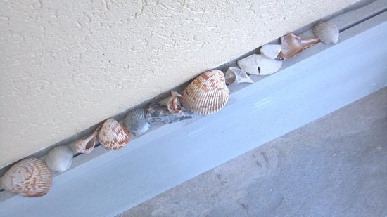 Treasure Bay Resort & Marina : someone left us some nifty shells on the balcony :)