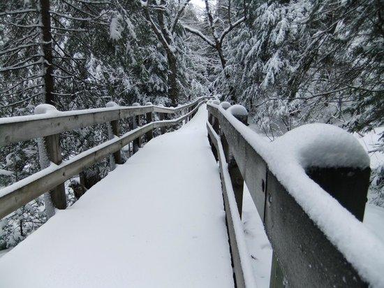 Wagner Falls Trail (Munising, MI)