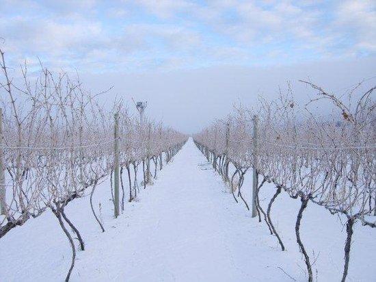 Stoneboat Vineyards: Winter in the Vineyard