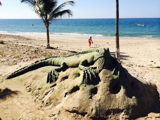 Sunset Plaza Beach Resort & Spa: iguana