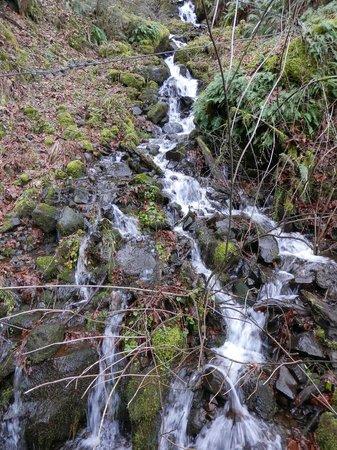 Columbia River Gorge National Scenic Area : Stream