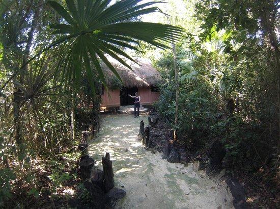 Jolie Jungle : Our nest