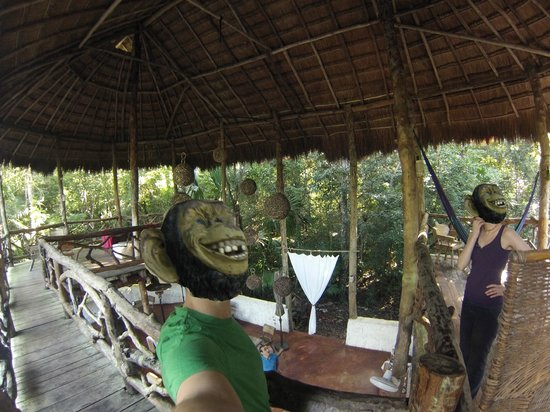 Jolie Jungle: Two monkeys and Dino in the club house