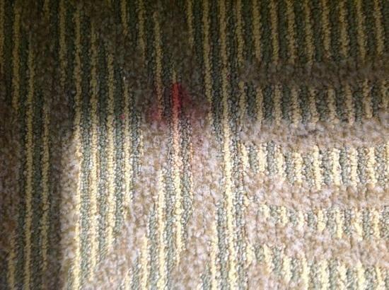 SpringHill Suites Portland Airport: carpet