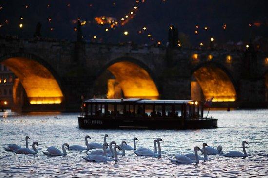 Prague Venice Boat Trip: Charles Bridge, boat and swans