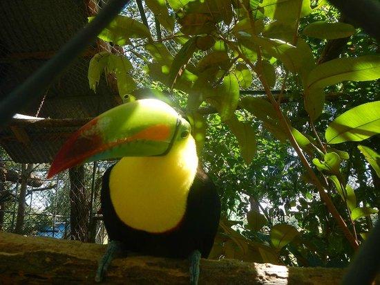 Hotel Riu Guanacaste : Zoo