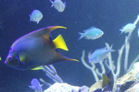... serpientes de agua - Picture of Aquarium de la Guadeloupe, Le Gosier