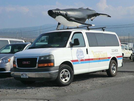 Captain Dan McSweeney's Whale Watching Adventures: their van