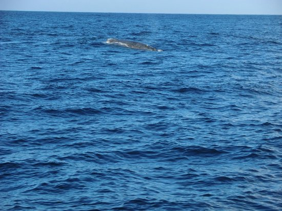 Captain Dan McSweeney's Whale Watching Adventures: a whale