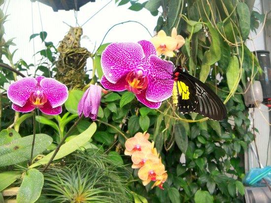 Tucson Botanical Gardens : Beautiful butterfly