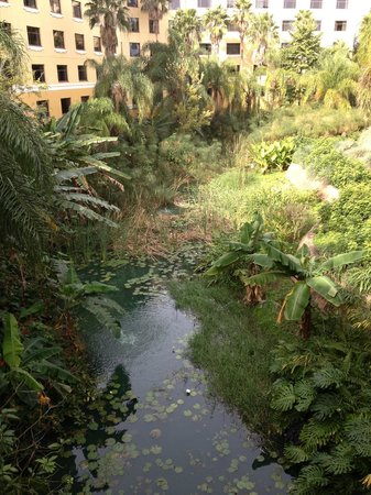 Loews Royal Pacific Resort at Universal Orlando: Love the foliage all around the hotel