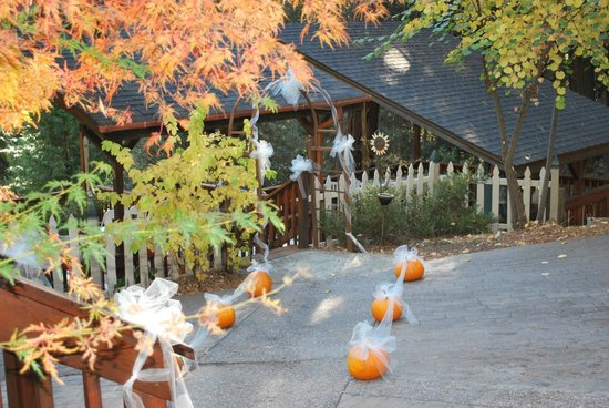 McCaffrey House Bed and Breakfast Inn : A perfect deck in the trees for wedding ceremony.