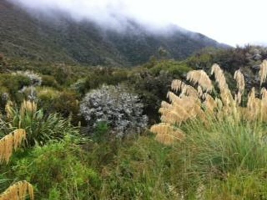 Hawke's Bay Region, Nueva Zelanda: Toitoi and cloud near Gentle Annie summit
