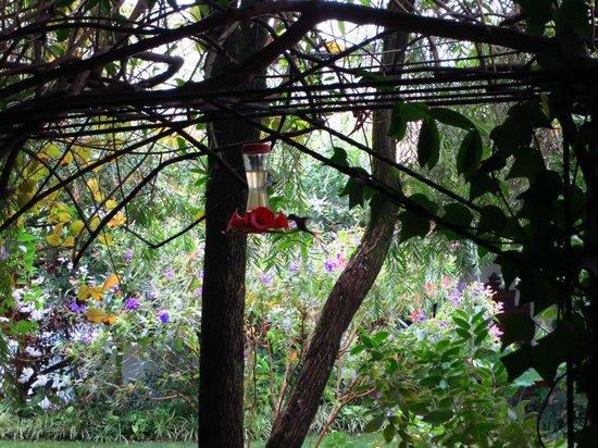 Hotel Casa Duranta: Hummingbird outside our room!
