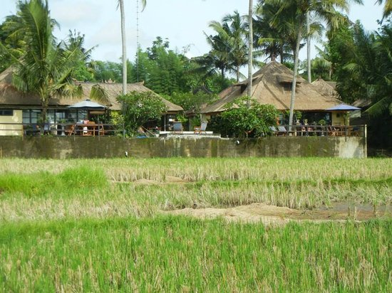 Lodtunduh Sari : View of the villa from the rice paddy