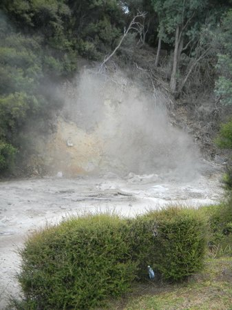Whakarewarewa - The Living Maori Village: Thermal Pools