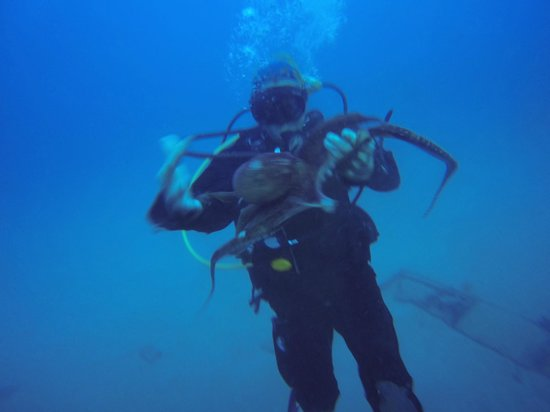 Ocean Legends Dive Center: Mary with an Octopus at the Sea Tiger Shipwreck