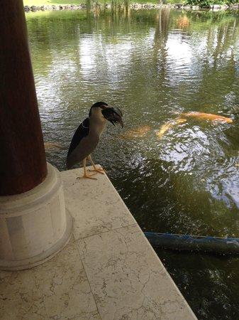 Grand Hyatt Bali: Fish caught!