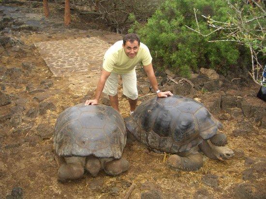 Charles Darwin Research Station: Взрослые черепахи