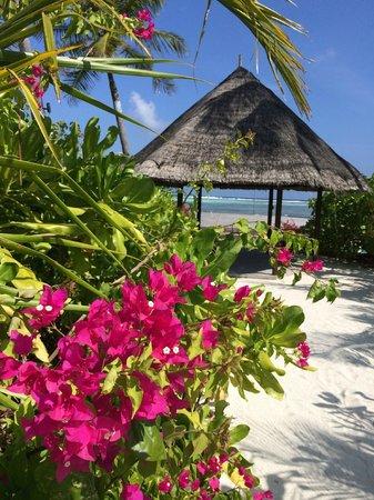 Four Seasons Resort Maldives at Kuda Huraa : Pool area
