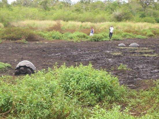 Reserva El Chato: В поле гуляют