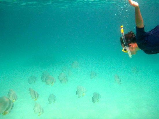 Four Seasons Resort Maldives at Kuda Huraa : Great snorkelling and diving