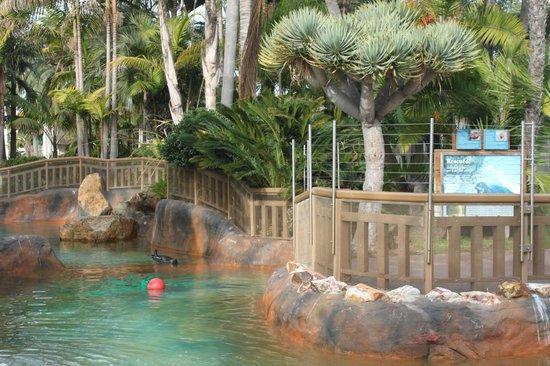 Bahia Resort Hotel: Rescued seal area