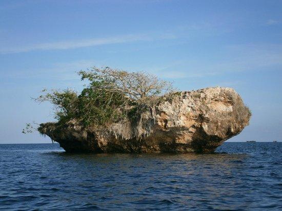 Island in Kisite Mpunguti Marine National Park