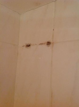 Ideal Hotel design : Mildew in shower