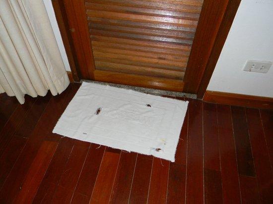 Chaweng Lakeview Condotel: Это полотенце. Видимо ещё с того года, как отель построили