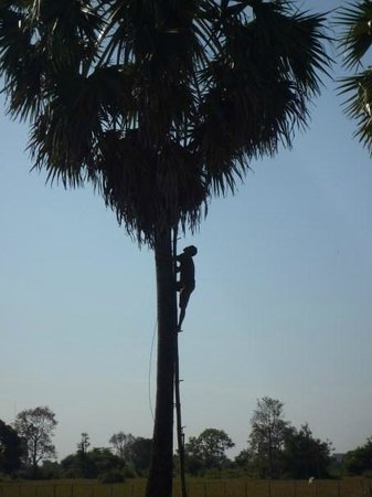 Khmer Ways - Moto Adventures Day Tours: Man up tree