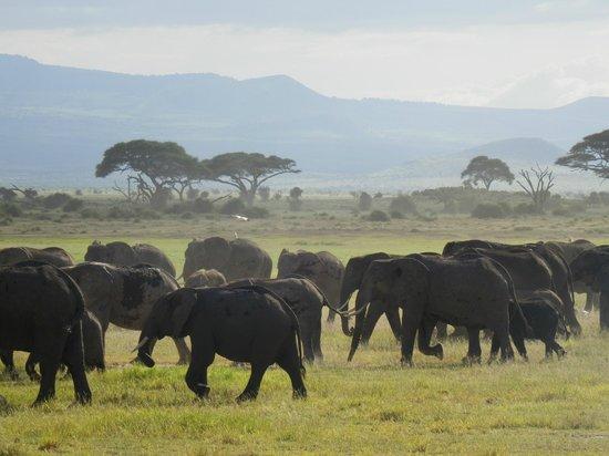 Amboseli National Park: E ancora elefanti....