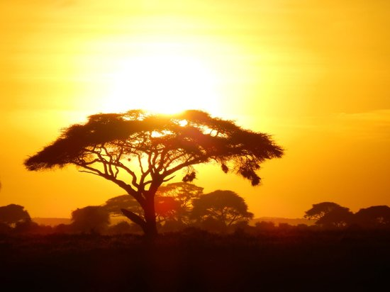Amboseli National Park: Acacia al tramonto