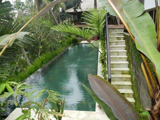 Umah Lu'ung: Nice Pool