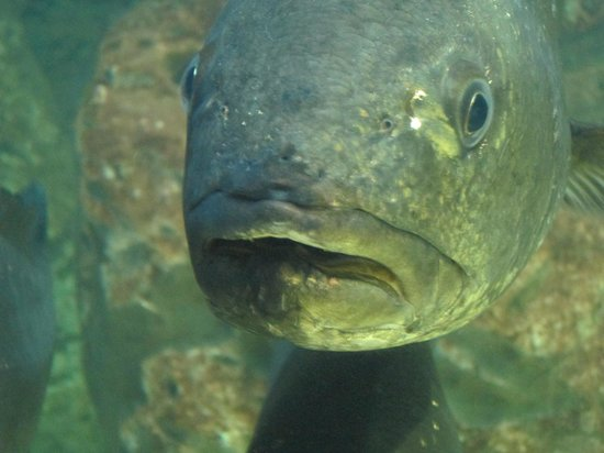 Malta National Aquarium: You're having WHAT with your chips?