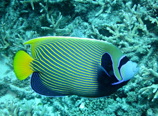Lady Elliot Island Eco Resort: diving