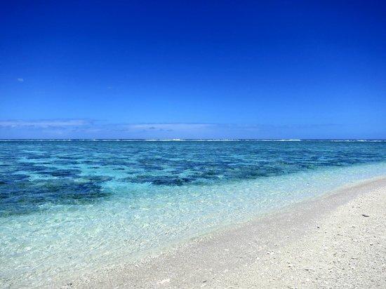 Lady Elliot Island Eco Resort: lagoon