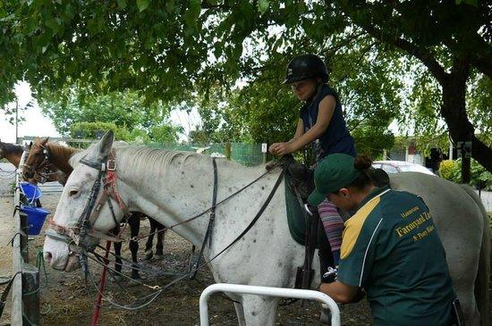 Hawkes Bay Farmyard Zoo : Getting ready for the off
