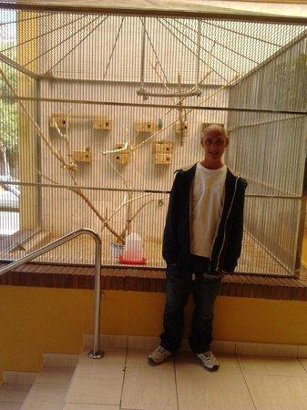 Playabonita Hotel: my husband loved these birds