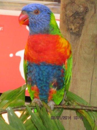 Wildlife Habitat Port Douglas: What colour