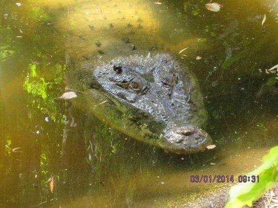 Wildlife Habitat Port Douglas: Is he hungry