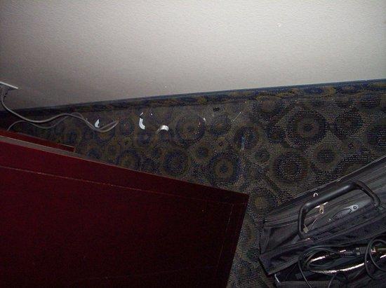 Supreme Inn & Suites - St James / Donaldsonville: Filth behind furniture - Neglect