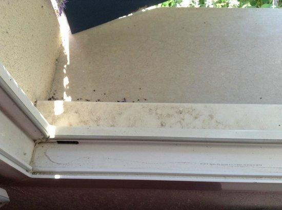 Residence les Jardins de Balnea: Bord des fenêtres remplit de cadavres de mouches !