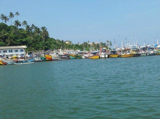 Bon Accord Guest House: Mirissa harbour