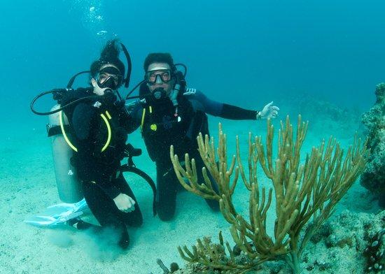 Octopus Diving: Proud Dad