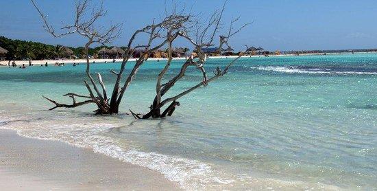 Paradera Park Aruba: aruba's beach