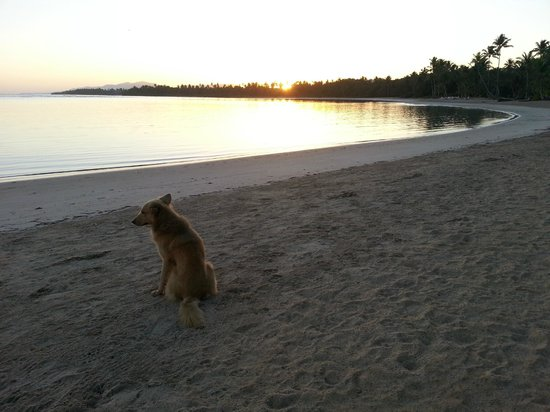 Grand Bahia Principe El Portillo : A dog watches the sun rise - on the public beach area